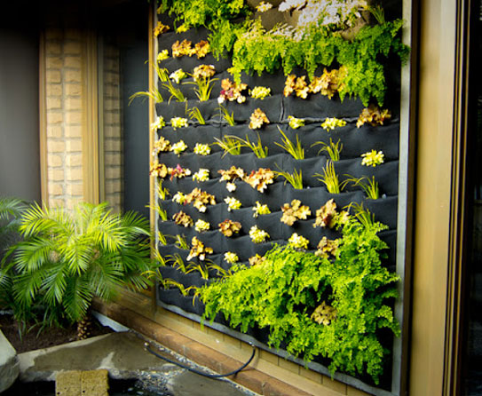 как сделать зимний сад
