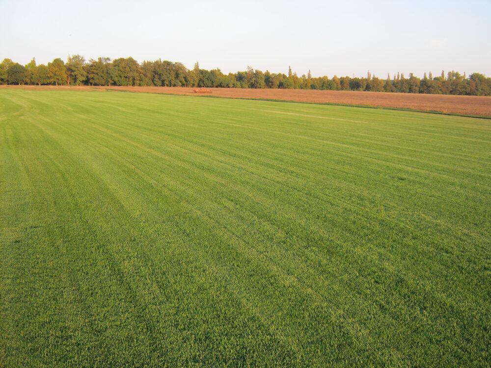 Почему выгодно заказать рулонный газон в компании «Evergreen»?
